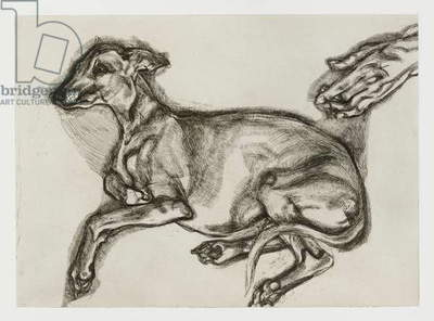 Pluto, aged twelve, 2000 (etching)