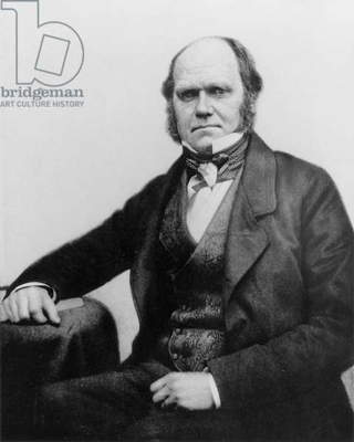 Portrait of Charles Darwin, 1854 (b/w photo)