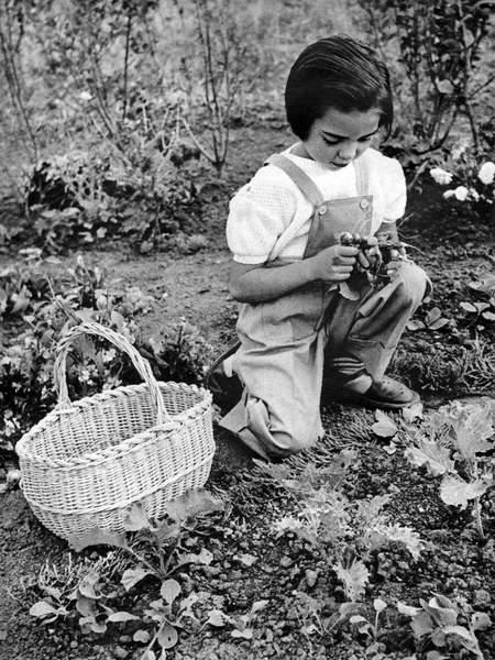 Image of young girl gardening, Geography. Gardening. Girl gardening. Photo in: Arts menagers, France, Apr. , 1954, Photo © CCI / Bridgeman Images