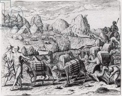 Pack Train of Llamas Laden with Silver from Potosi Mines of Peru, engraved by Theodore de Bry (1528-98), from 'Americae', 1602 (engraving) (b&w photo)