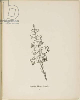 Fictional plant: 'Barkia Howlaloudia' . Illustrations from Nonsense Botany, and Nonsense Alphabets by Edward Lear.
