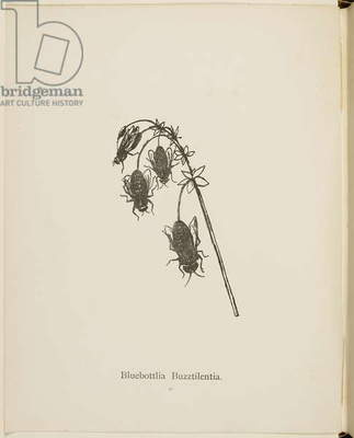 Bluebottlia Buzztilentia (fictional plant) Illustrations and titles of plants from the Nonsense Botany collection by Edward Lear.