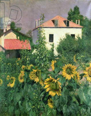 Sunflowers in the Garden at Petit Gennevilliers (oil on canvas)