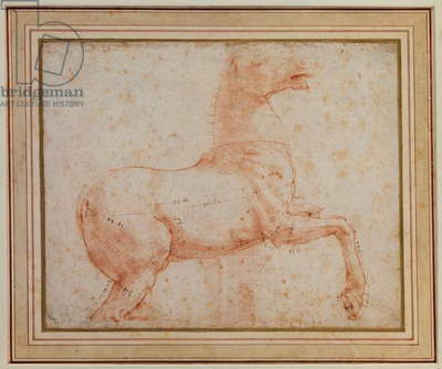 Study of one of the Quirinal Marble Horses, c.1515-17 (red chalk)