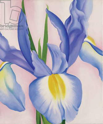 Lavender Iris, 1952 (oil on canvas)
