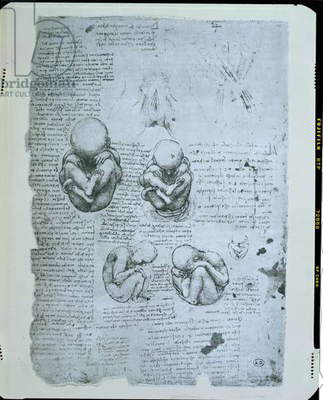 Five Views of a Foetus in the Womb, facsimile copy (pen & ink on paper)