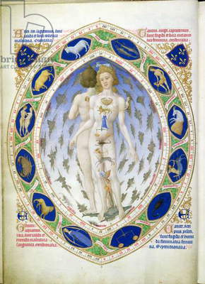 Ms 65/1284 f.14v The anatomy of Man and Woman, from the 'Tres Riches Heures du Duc de Berry' (vellum)