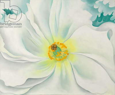White Flower, 1929 (oil on canvas)