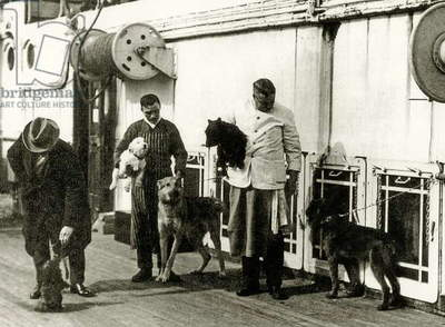 Dogs being looked after by members of the crew of the Titanic, 1912 (b/w photo)