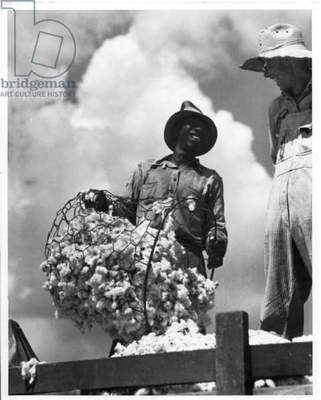 Cotton worker, Texas, 1935-36 (b/w photo)