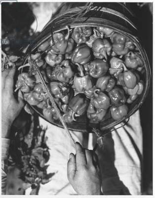 Peppers, 1935-36 (b/w photo)