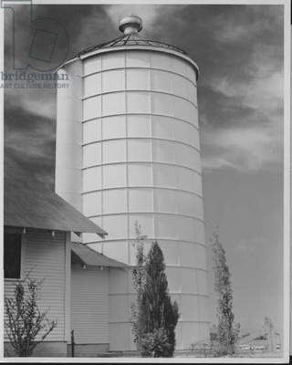 Silo on a Dairy Farm, 1935-36 (b/w photo)