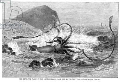 SQUID WASHED ASHORE, 1877 A giant squid washed ashore on the Newfoundland coast in 1877. Wood engraving from a contemporary American newspaper.