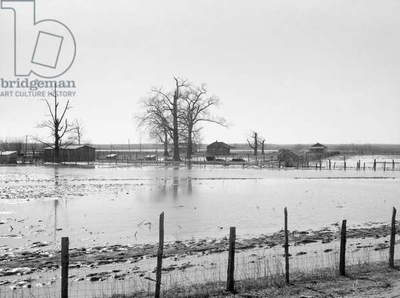 TENNESSEE: FLOOD, 1937 Farmland submerged by the flood at Bessie Levee near Tiptonville, Tennessee. Photograph by Walker Evans, February 1937.