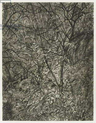 Garden in Winter, 1997-99 (etching)