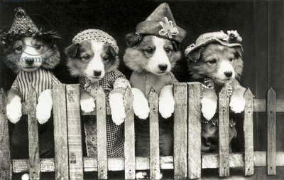 Dressed Puppies Standing at a Fence, 1929 (silver print photograph)