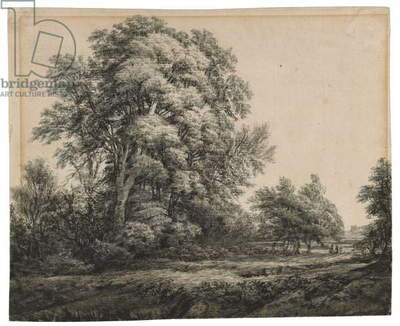 Forest Landscape, c. 1838-1848 (ink and wash on laid paper)