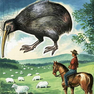 The Kiwi, emblem of New Zealand