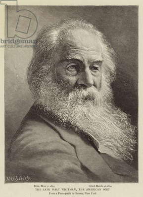 The Late Walt Whitman, the American Poet (engraving)