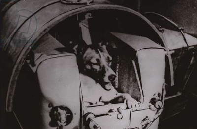Laika, the first animal to orbit the Earth (b/w photo)