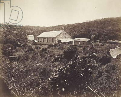 The German Transit of Venus Expedition, Auckland Islands, 1874-75 (albumen print)