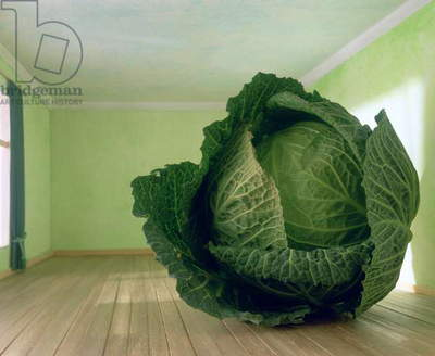 Cabbage (after Magritte) 1995 (photo)