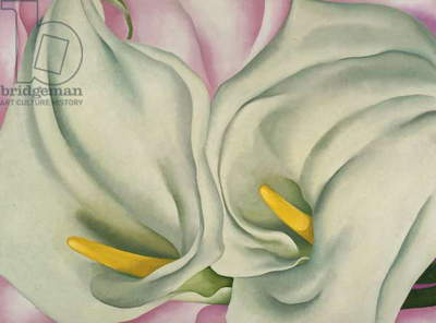 Two Calla Lilies on Pink, 1928 (oil on canvas)