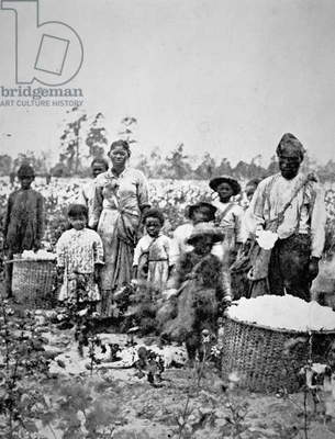 A slave family in a Georgia cotton field, c.1860 (b/w photo)