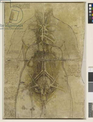 The principal organs and vessels of a woman, c.1510 (pen & ink with chalk & wash on paper)