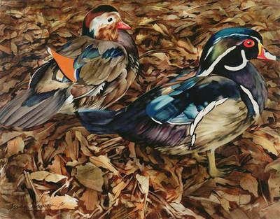 Carolonia Ducks, 1991 (w/c on paper)