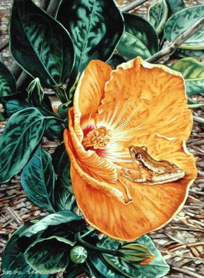 Tree Frog in Yellow Hibiscus, 1989 (gouache on paper)
