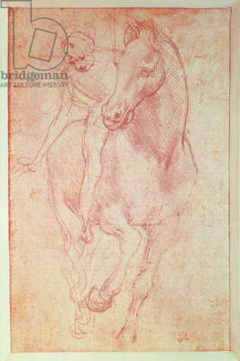 Study of a Horse and Rider, c.1481 (metalpoint on paper)