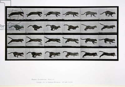 Cat running, plate 720 from 'Animal Locomotion', 1887 (b/w photo)