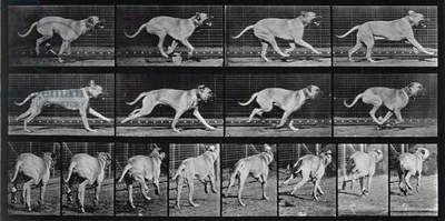 Running Dog, plate 707 from 'Animal Locomotion', 1887 (b/w photo)