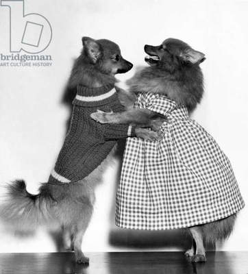 Teaching A Young Dog New Trick, 1947 (b/w photo)