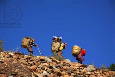 Women carrying firewood from Mount Gangapurna, in Manung, Nepal. July 3, 2009.  (photo)