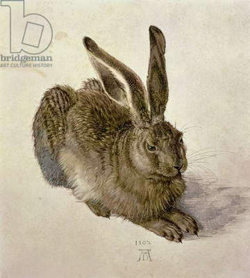 Hare, 1502 (w/c on paper)