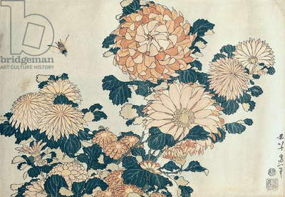 Chrysanthemums (colour woodblock print)