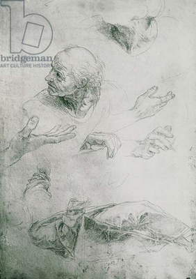 Studies for the Figure of Bramante (1444-1515) (pencil on paper) (b/w photo)