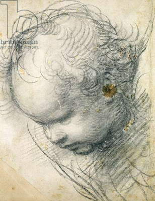 Head of a Cherub (black chalk and charcoal on paper)