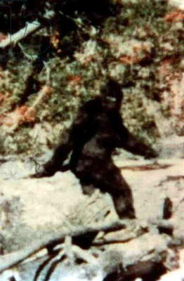 Bigfoot, film by Roger Patterson and Bob Gimlin, October 1967 in Bluff Creek (California)
