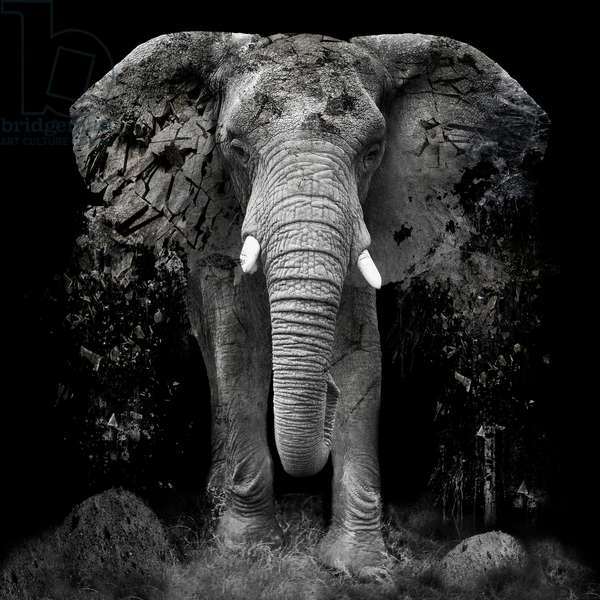The Disappearance of the Elephant, 2014, (Direct Print on Brushed Aluminium, BUTLERFINISH® Look)