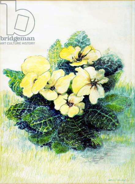 Primrose Pale Yellow, 2005 (water colour)