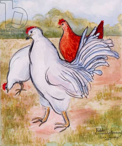 Ralphy,The Cockerel ,2005,(pencil and water colour)