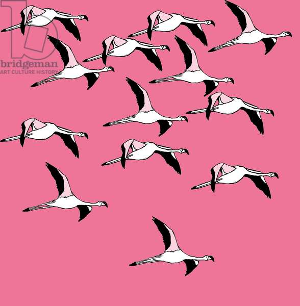 Flying Flamingos, 2017, (ink on paper)