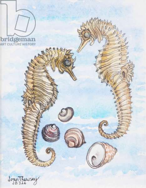 Two Seahorses, with Shells, 2000, (pencil and watercolour)