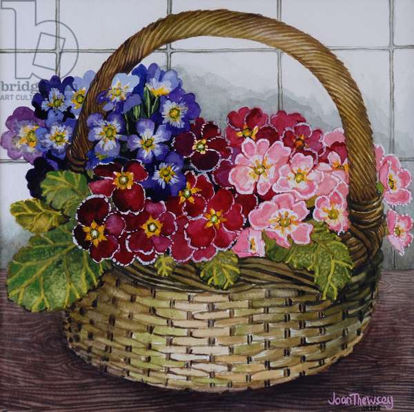 Red Mauve and Pink Primroses in a Basket 2012 (w/c on paper)