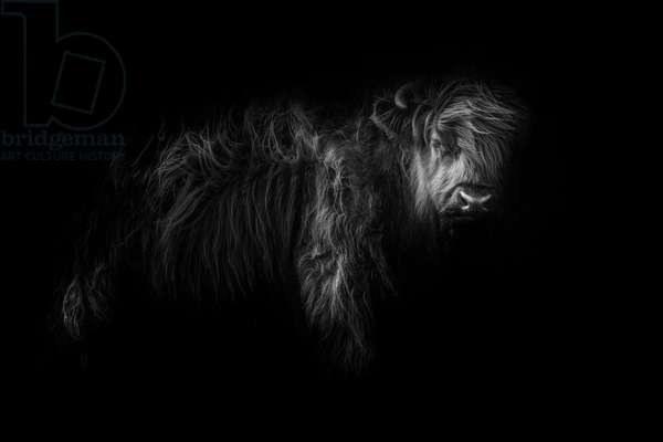 Heilan Coo, 2017, (Direct Print on Brushed Aluminium, BUTLERFINISH® Look)