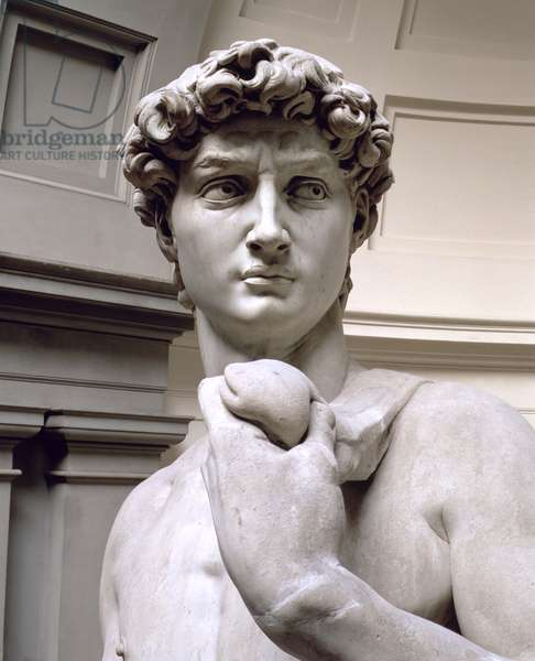 David, head of sculpture by Michelangelo Buonarroti (1475-1564), 1501-4 (marble) (detail of 4344)