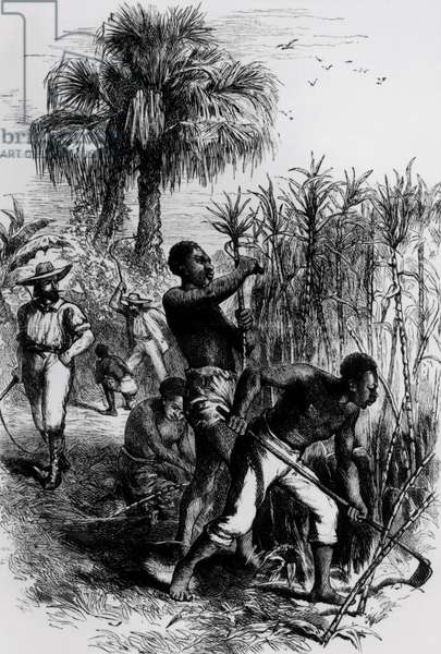 Slaves Working on a Plantation, from Cassell's 'History of the United States' (engraving) (b&w photo)